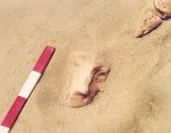 ©Emmanuel Pierrot - archeologie du pied de cochon 5