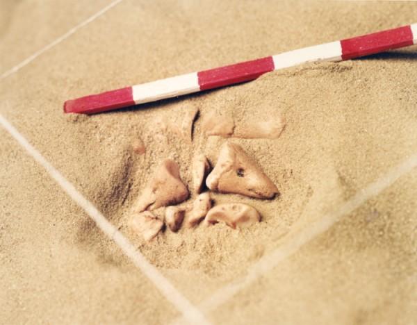 ©Emmanuel Pierrot - archeologie du pied de cochon 1