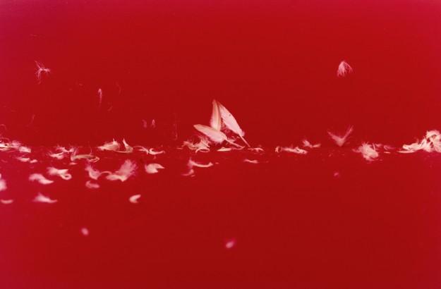 ©Emmanuel Pierrot - Fond de couleur 5